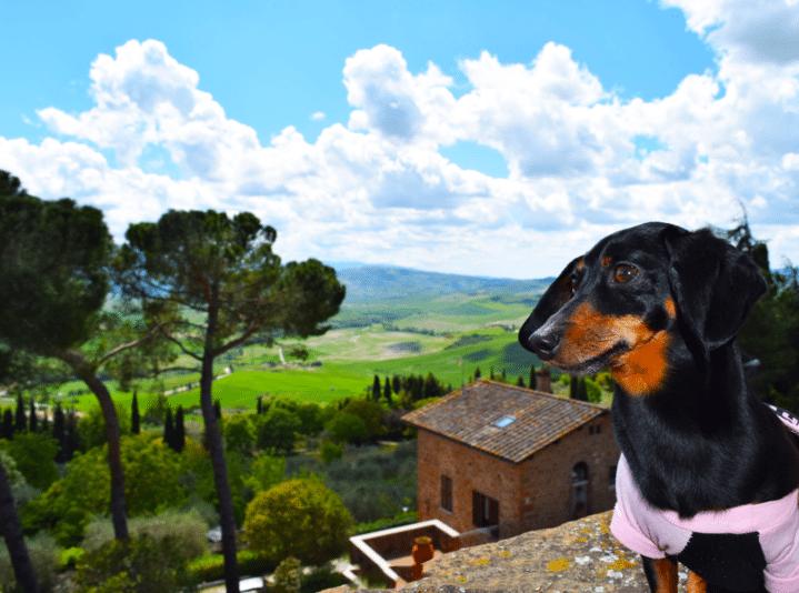 Tuscan Culinary Schooling